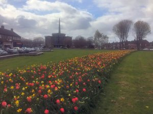 Flowers in bloom outside Finglas Centre.